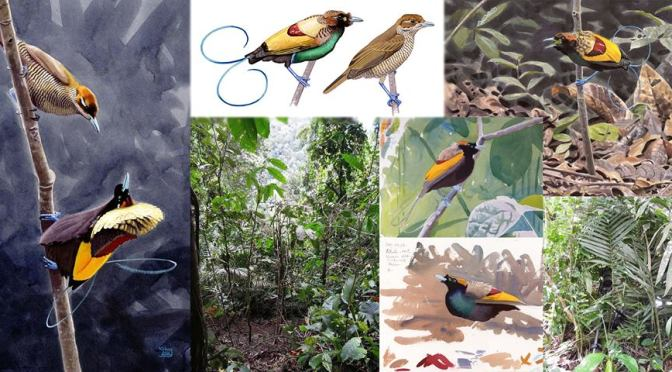 Birding in New Guinea