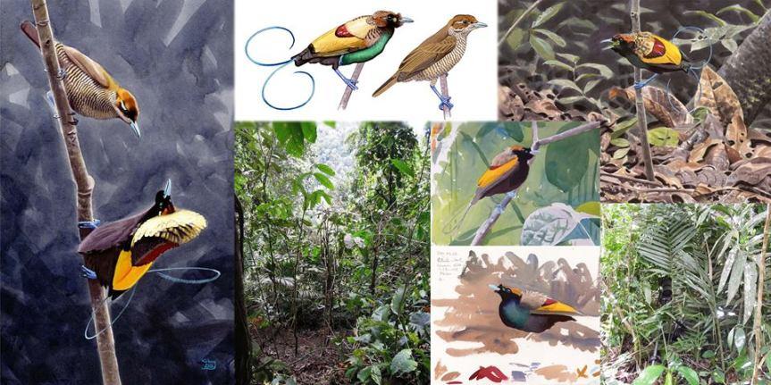 Birding in NewGuinea