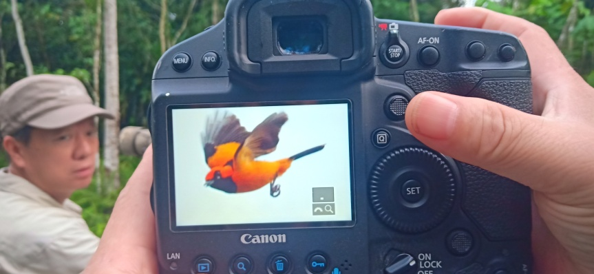 Biak Island Birding